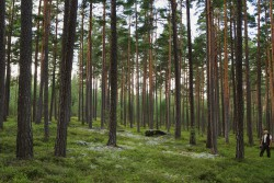 <p><strong>Caption:</strong> Stora Enso drives sustainable forest management as it safeguards forest health and productivity, helps combat global warming, and protects biodiversity – whilst securing the long-term availability of our renewable resources.Image: Stora Enso</p> (photo: )